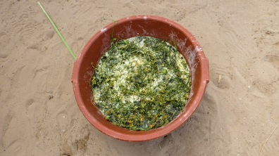 Momordica sharantia known as mbeurbof, here used for making soap